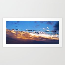 Pigeons On a Wire Art Print