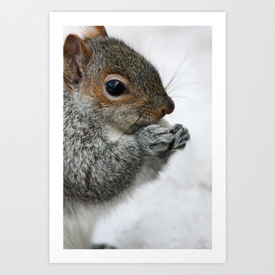 Snow Squirrel Art Print
