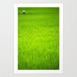 Lost in rice Art Print