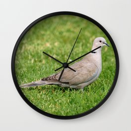 Grey Collared Dove Bird Wall Clock