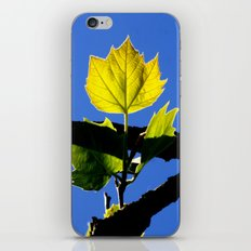Spring Leaf. iPhone & iPod Skin