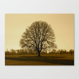 tree xrays Canvas Print