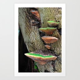 Bracket fungus (#1) Art Print