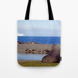 Fur seals with iceberg in the distance Tote Bag