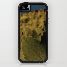 field of the leafs on the sky iPhone Case