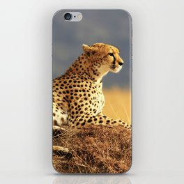 Cheetah on the hill iPhone Skin