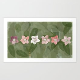 Flower Christmas Rose Art Print
