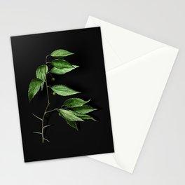 Vintage European Nettle Tree Botanical Illustration on Black (Portrait) Stationery Cards