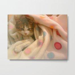 Kitty photo Metal Print