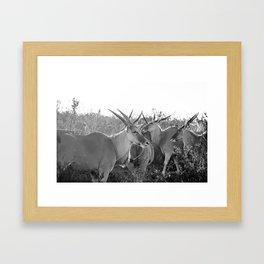 Herd of Eland stand in tall grass in African savanna Framed Art Print