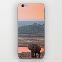 Walk in the evening light, Africa wildlife iPhone Skin