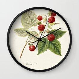 Red Raspberries (Rubus Idaeus) (1891) by Frank Muller Wall Clock