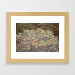 Natures Pallete Framed Art Print