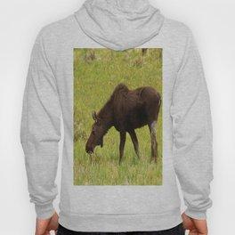 Young Moose Hoody