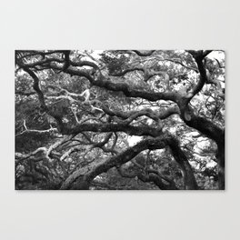 Live Oak Tree - black and white Canvas Print