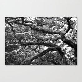 Live Oak Tree - black and white Canvas Print