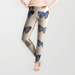 Vintage Hand Drawn Scientific Illustration Insects Butterfly Anatomy Colorful Wings Leggings