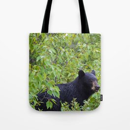 Black bear in Jasper National Park, Canada Tote Bag