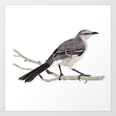 Northern mockingbird - Cenzontle - Mimus polyglottos Art Print