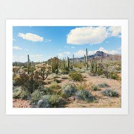 Desert Plant Growth Art Print
