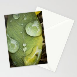 Raindrops on a green leaf Stationery Cards
