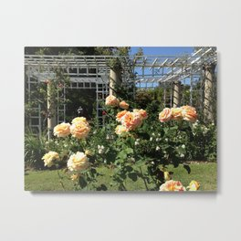 Huntington Roses: III Metal Print