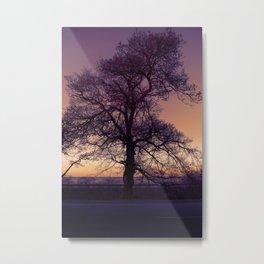 Ocean highway old tree and the sea horizon Metal Print
