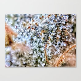Diamond OG Top Shelf Trichomes Close Up View Canvas Print