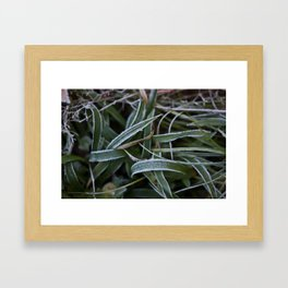 Gräs Framed Art Print