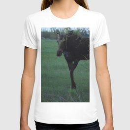 Evening Missy walking T-shirt