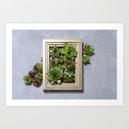 Succulent plants decor Art Print