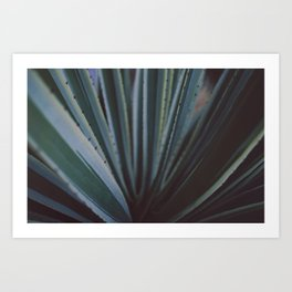 Soothing Succulent Art Print