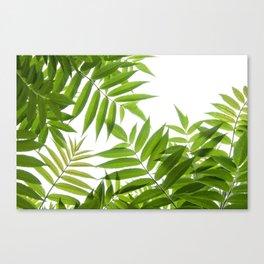 Embrace of a Rowan Tree Canvas Print