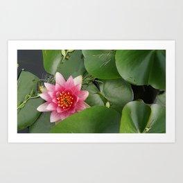 Lotus Flowe_pink1 Art Print