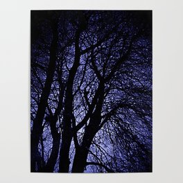 Barren Tree Branches Poster