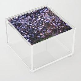 Sea Shells Acrylic Box