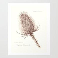 Wild Teasel botanical poster Art Print