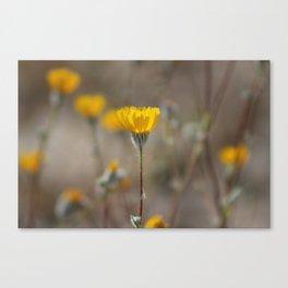 Closeup Desert Sunflowers Coachella Wildlife Preserve Canvas Print