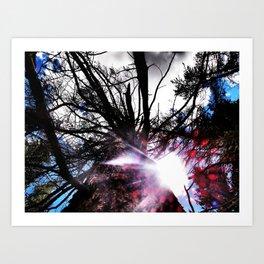 Shine through the Branches  Art Print