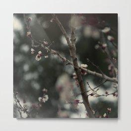 Apricot tree III Metal Print