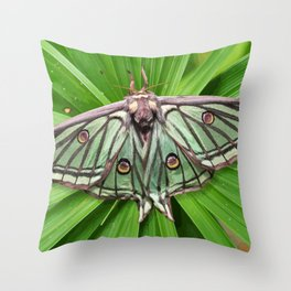 Spanish Moon Moth on Spiraling Palm Plant Throw Pillow