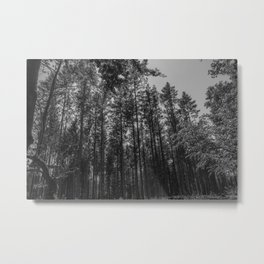 Black and white forest - Beautiful trees Metal Print
