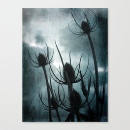 Twilight Teasles Canvas Print