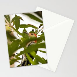 Peaking Woodpecker Stationery Cards