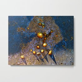 Limpets Mollusks Shells Metal Surface Coastal Metal Print