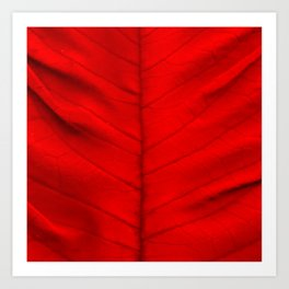 Poinsettia's leaf Art Print