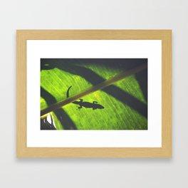Green Geco Framed Art Print