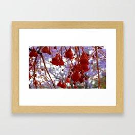 Flame Tree Framed Art Print