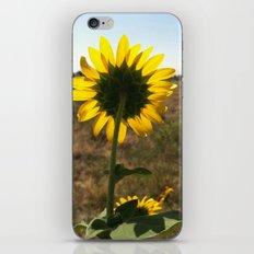 Light through the Sunflower iPhone & iPod Skin