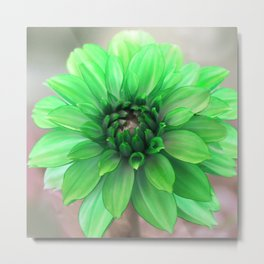 Green Dahlia Metal Print